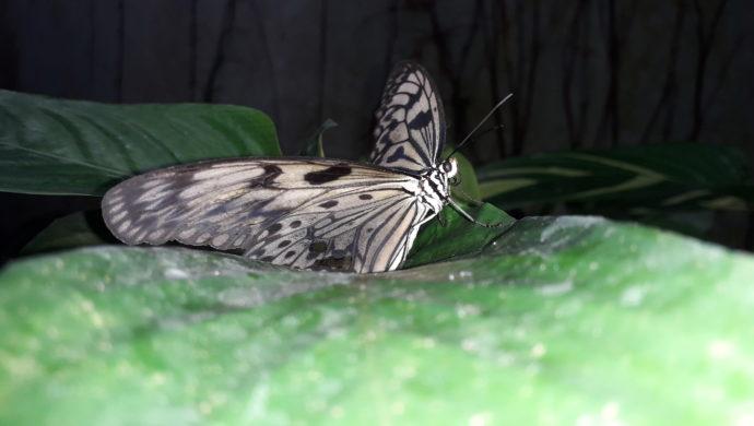 🦋 Envole-moi 🐦 Papillons de lumière 🦋