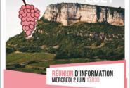 🔅🍇Projet Vendanges dans le Mâconnais : un job d'été et une expérience inoubliable !🍇🔅